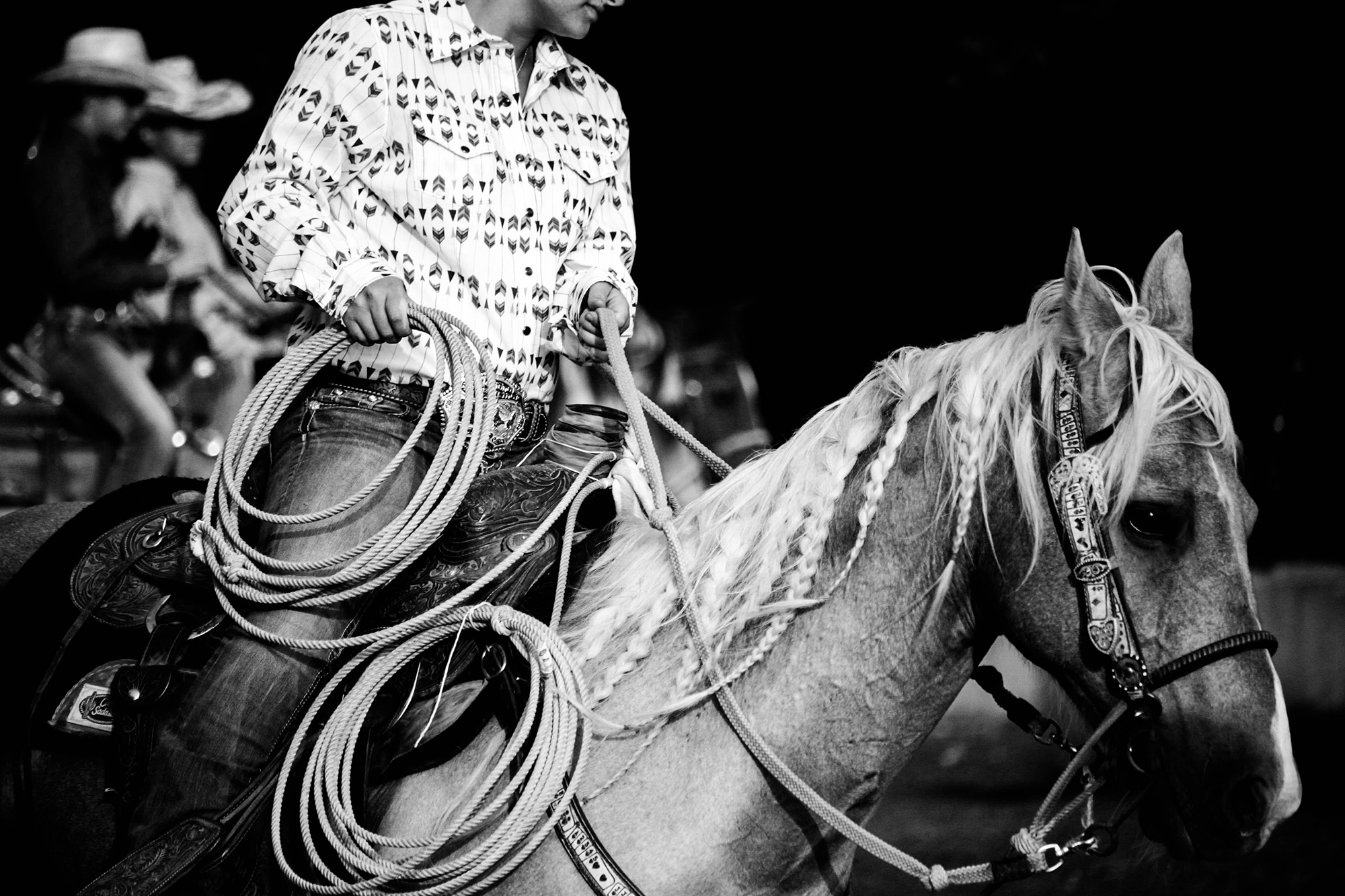 bw-horse